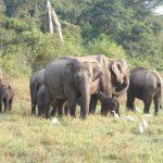 Nationaal Park van Wasgamuwa